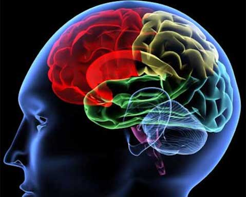 Efectos de los estimulantes en el cerebro