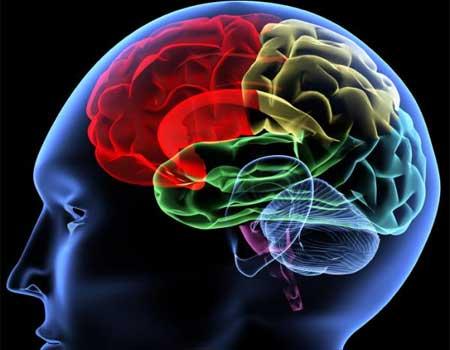 ¿Cómo afectan las drogas en el cerebro?