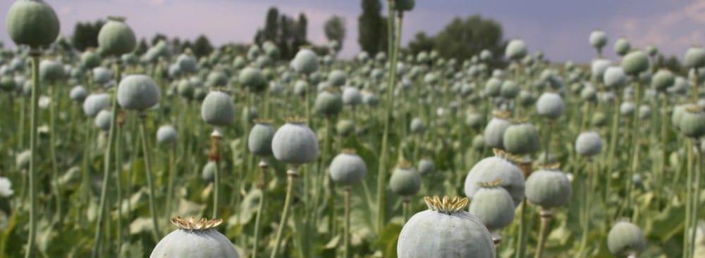 ¿Qué es el Opio?